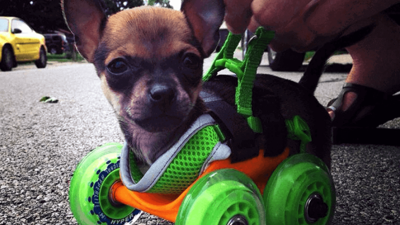 Featured image of 3D Printing Helps our Pets and Friends