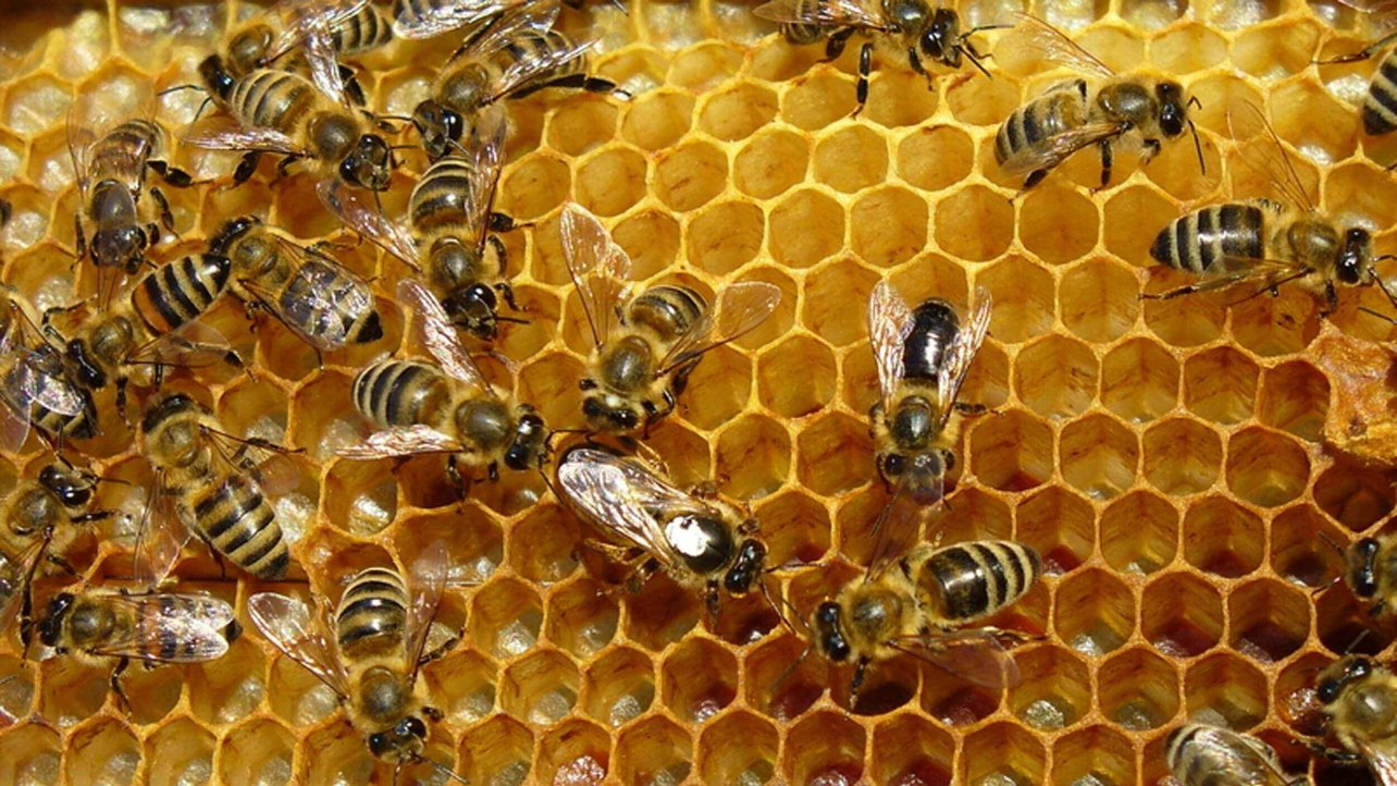 Featured image of 3D Printed Beehive: Save the Bees with HiveHaven
