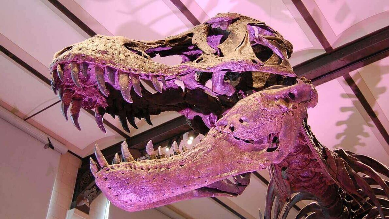 Featured image of 3D Printed Fossils can be Printed and Shared