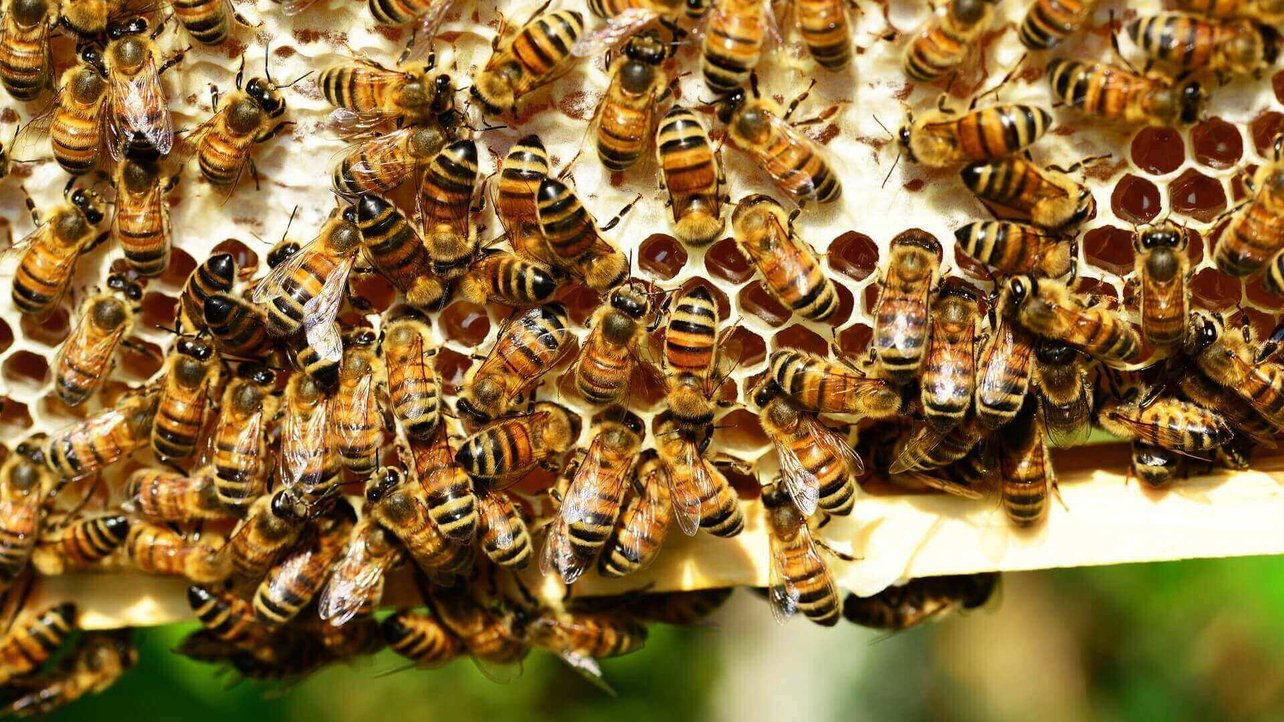 Featured image of 3D Printed Honeycombs Help Optimize Honey Production