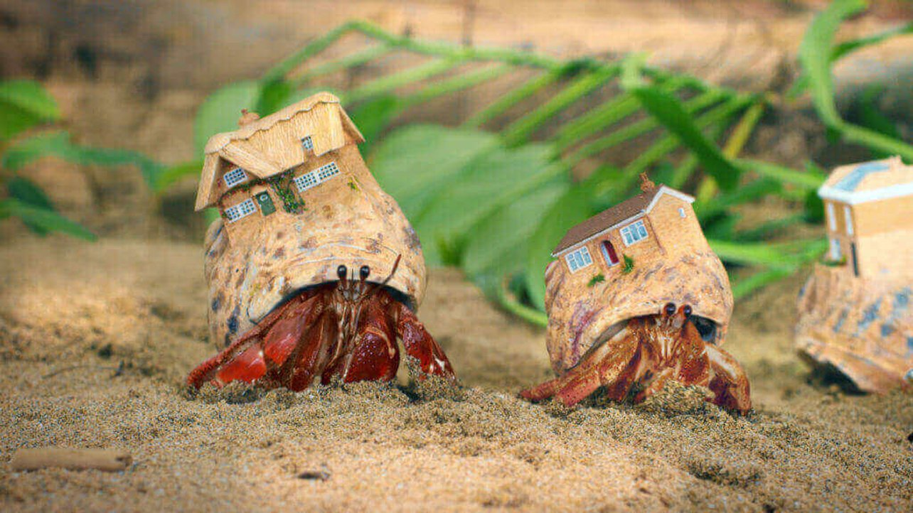 Featured image of This TV Advert has Custom 3D Printed Homes for Hermit Crabs