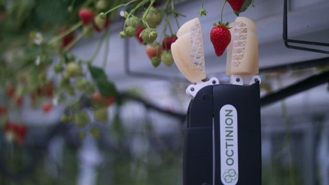 Featured image of This 3D Printed Robot Picks Strawberries Better than Humans