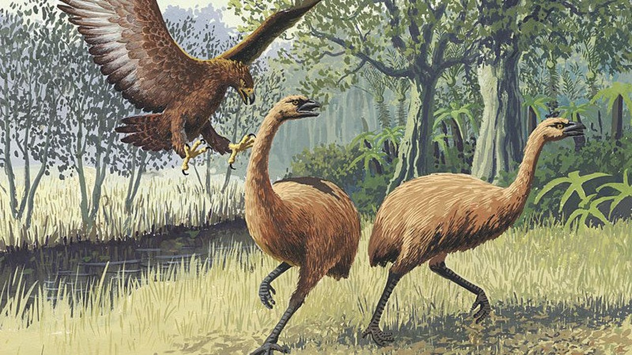 Featured image of Giant 3D Printed Bones Help Students Learn About Extinct Moa Birds