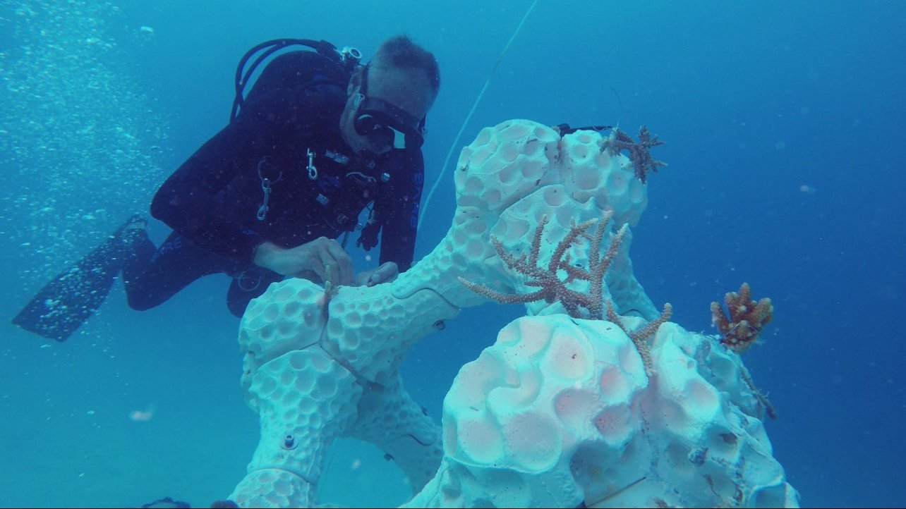 Featured image of 3D Printing Supports Growth of Coral Reef Ecosystem in the Maldives