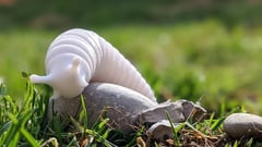 Featured image of 3D Printed Slug: Incredibly Cute Models to 3D Print