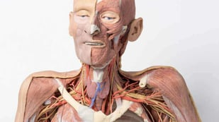 Featured image of 3D Printed Cadavers to Modernize Human Anatomy Study