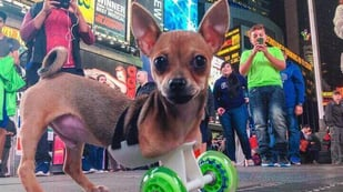 Featured image of 11 Animals Helped Out by 3D Printed Prostheses