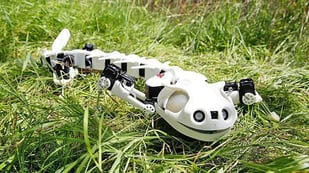 Featured image of Pleurobot is 3D Printed Robot that Walks & Swims like a Salamander