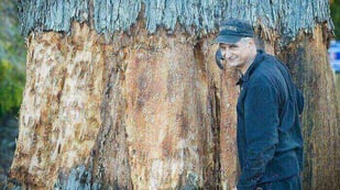 Featured image of Artist Ironically Scans Tasmanian Eucalyptus Tree and 3D Prints it in Paper