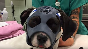 Featured image of Puppy's Life Saved by 3D Printed Mask After Attack by Savage Dog