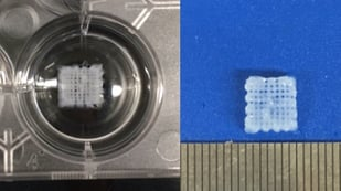 Featured image of Researchers 3D Bioprint Scaffolds to Help Regrow Damaged Peripheral Nerves