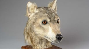 Featured image of 4,000-Year-Old Neolithic Dog Head Reconstructed with 3D Printing