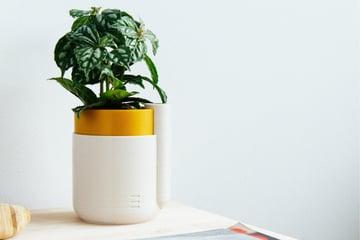 Imagem de Coisas para imprimir em 3D: Vaso auto-irrigável para plantas