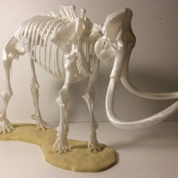 A printed mammoth skeleton.