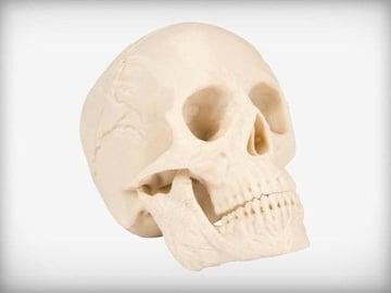 A classic printed skull