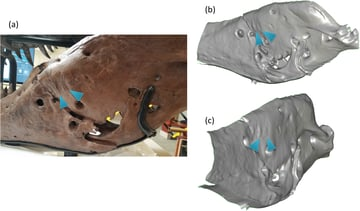 Paleontologists use 3D scanning to catalog and compare measurements in fossils