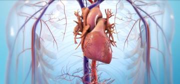 Bioprinted organs could eliminate major deficits in the transplant industry