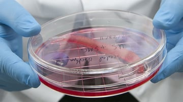 WFIRM develops more than 30 different tissues and organs