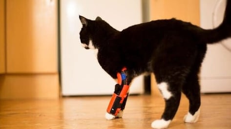 Featured image of Pet Owner Makes 3D Printed Orthosis For Disabled Cat