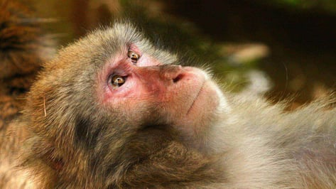 Featured image of Chinese Scientists Implant 3D Printed Blood Vessels into Monkeys