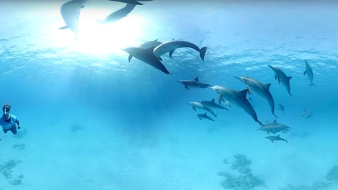 Featured image of Swimming With Dolphins Goes Cruelty-free Thanks to Waterproof VR Googles