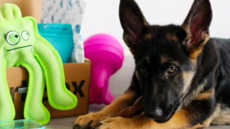 Featured image of Startup Bark Uses 3D Printing to Prototype Dog Toys