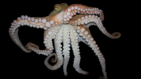 Featured image of U.S. Army Develops 3D Printed Soft Robotics Inspired by Invertebrates