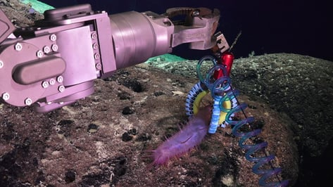 Featured image of Researchers 3D Print Soft Robotic Manipulators to Investigate Fragile Deep-Sea Life