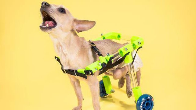 Featured image of The CAP Project uses 3D Printing to Help Pets in Need