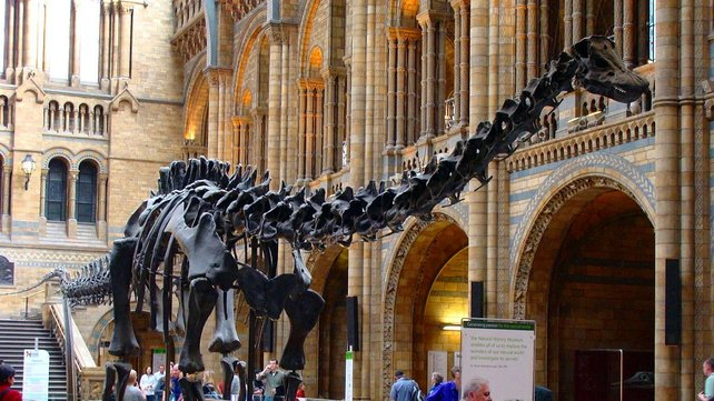 """Featured image of Touch a 3D Printed Dinosaur Skull During the UK """"Dippy"""" Tour"""