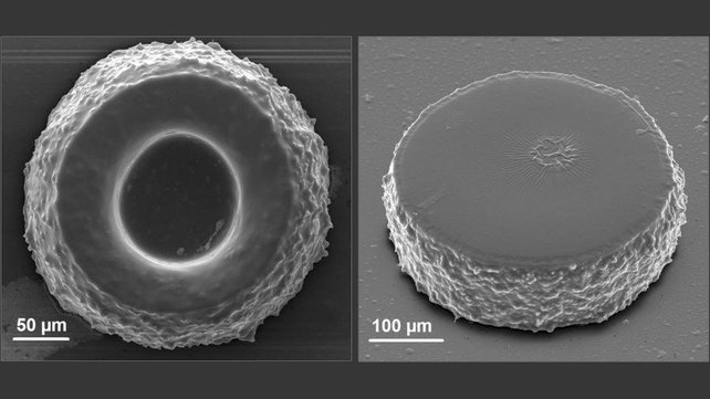 Featured image of Russian Physicists Develop Special Nanoparticles for Biomedical 3D Printing Process