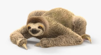 A three-toed sloth model on Hum3D