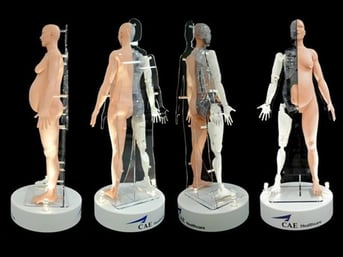 A highly detailed and specific human body model