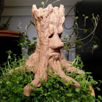 An old spirit tree with a face carved into it