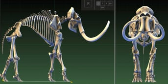 Paleontologists use 3D scanning to capture data on fossils of extinct species, such as the mammoth