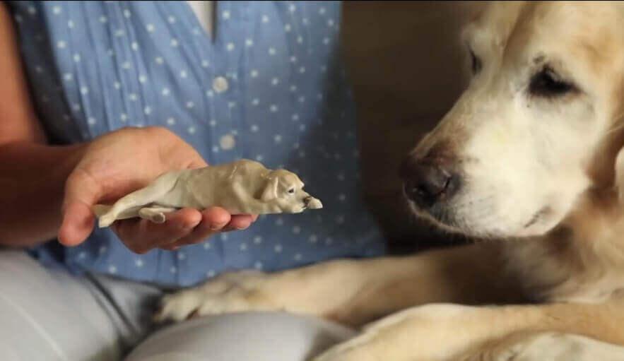 3D Print your Pet | All3DP