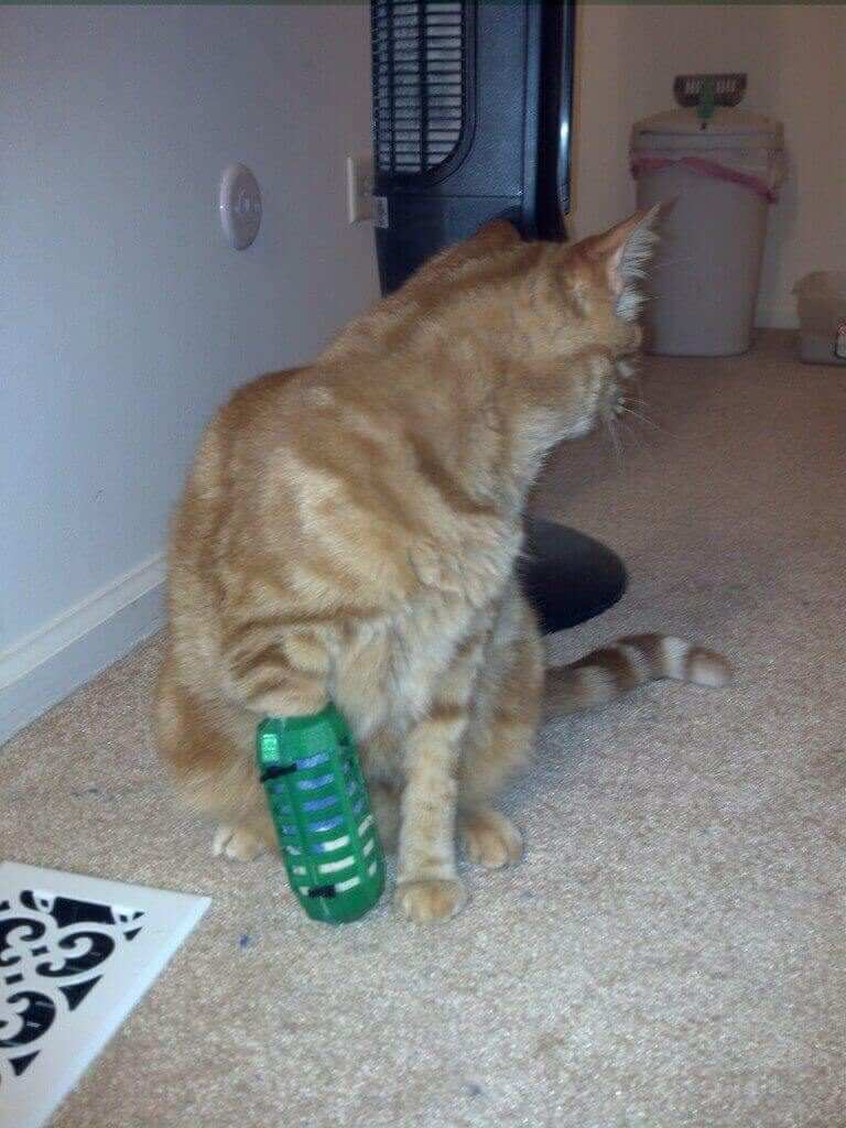 Image of 3D Printed Cat Accessories: Bandage Cage for Cat Leg