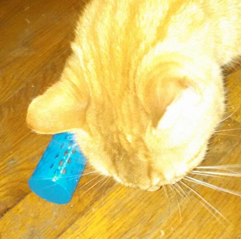 Image of 3D Printed Cat Accessories: Food-dispensing Cat Toy