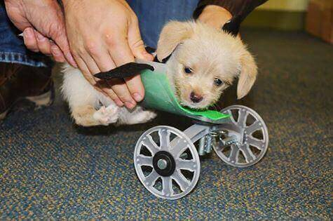 3D Printed Puppy Wheelchair for Teeny Tumbles | All3DP