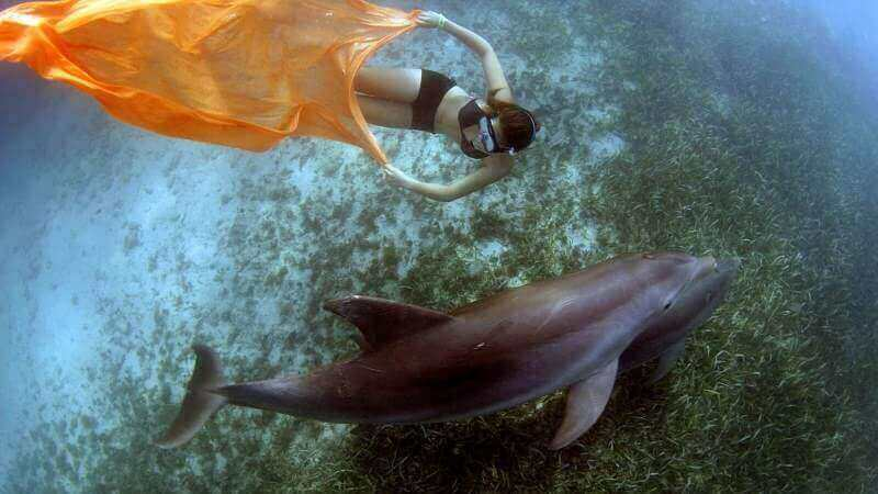 Researchers 3D Print How Dolphins See Humans | All3DP