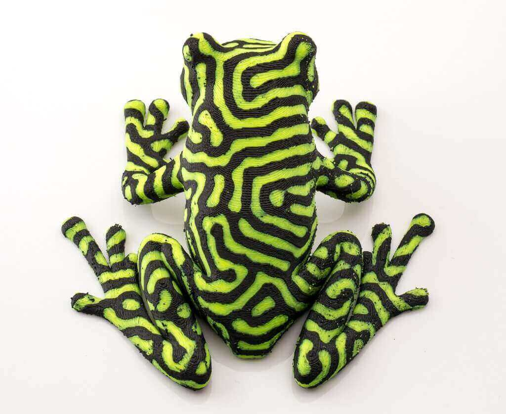 two color tree frog
