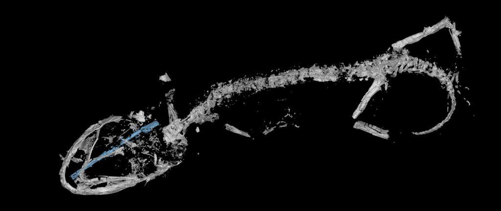 world's oldest chameleon
