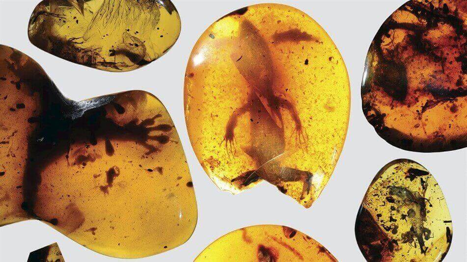 Trapped in Amber, World's Oldest Chameleon is Scanned and Printed | All3DP