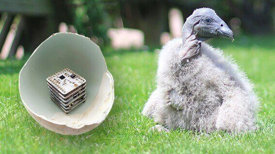 3D Printed Eggs Could Save Vultures from Extinction | All3DP