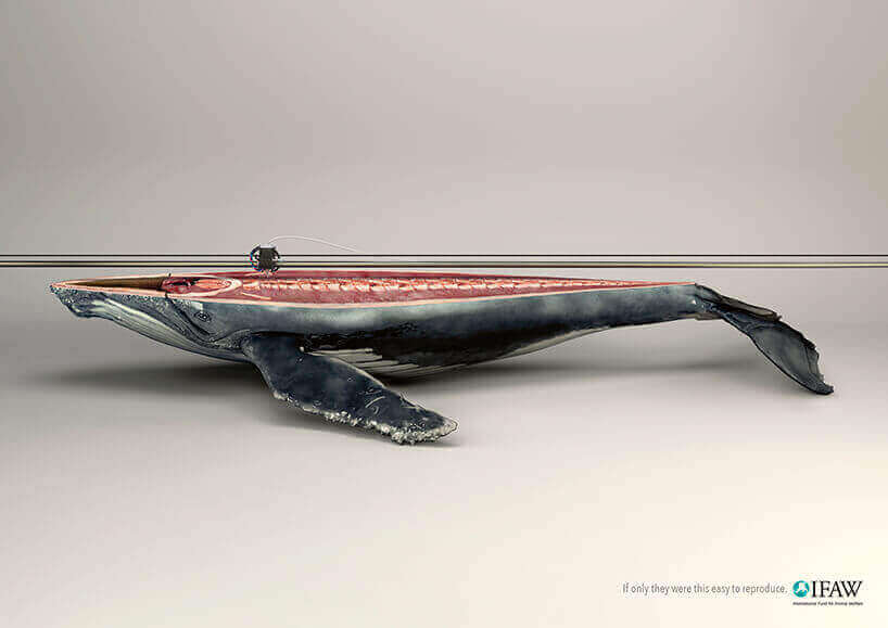 IFAW whale