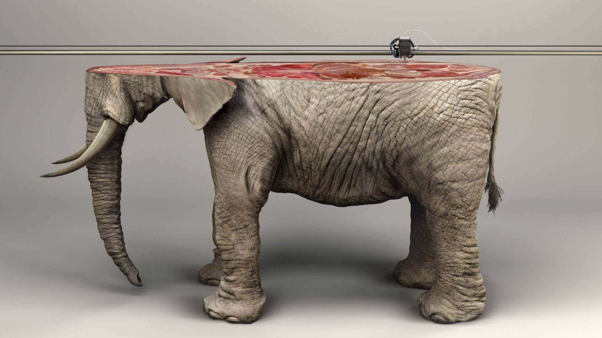 IFAW Awareness Campaign 3D Prints Endangered Animals | All3DP