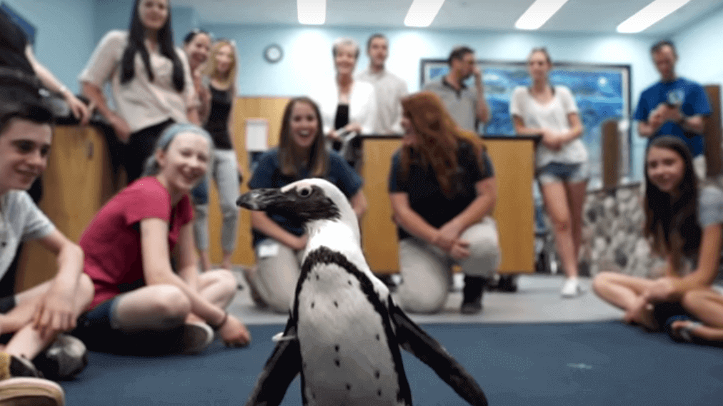 Schoolkids Help Purps the Penguin Walk Again with 3D Printing | All3DP
