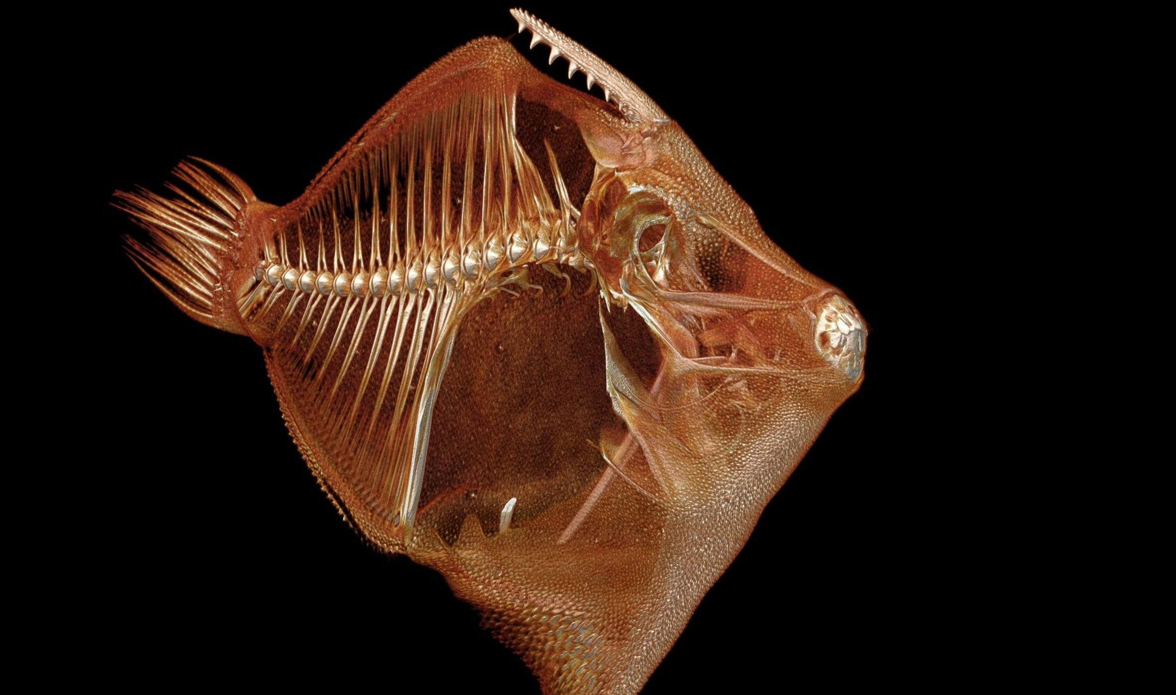 ScanAllFish Project Turning World's Fish into 3D Scans | All3DP