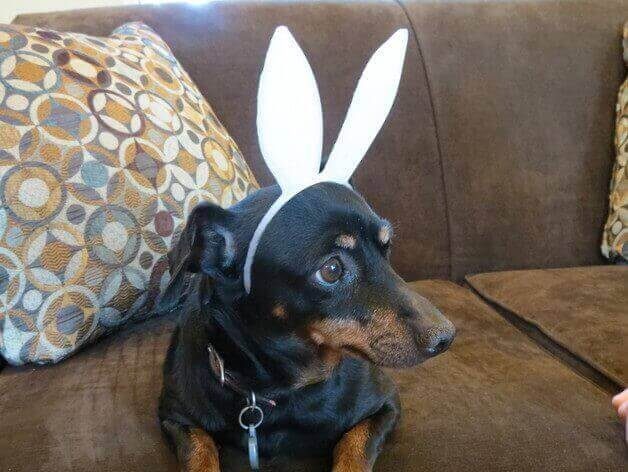 30 3D Printed Objects For Your Pet Pet Sized Bunny Ears