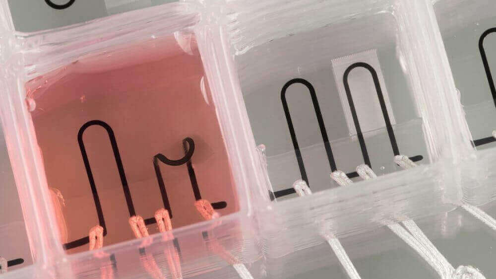 Harvard Researchers 3D Print Heart-on-a-Chip | All3DP